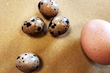 Uova quaglia Orto di Roma