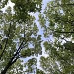 礼儀正しい樹木達