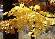 紅葉が美しいアップステートの公園「ミネワスカ州立公園」