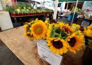 ユニオンスクエアー・ファーマーズマーケット – 毎週土曜日に開催される屋外マーケット