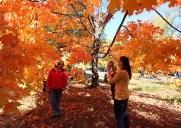 セントラルパークの紅葉