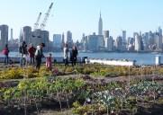 Roof Top Farm – ブルックリンで話題の屋上農園