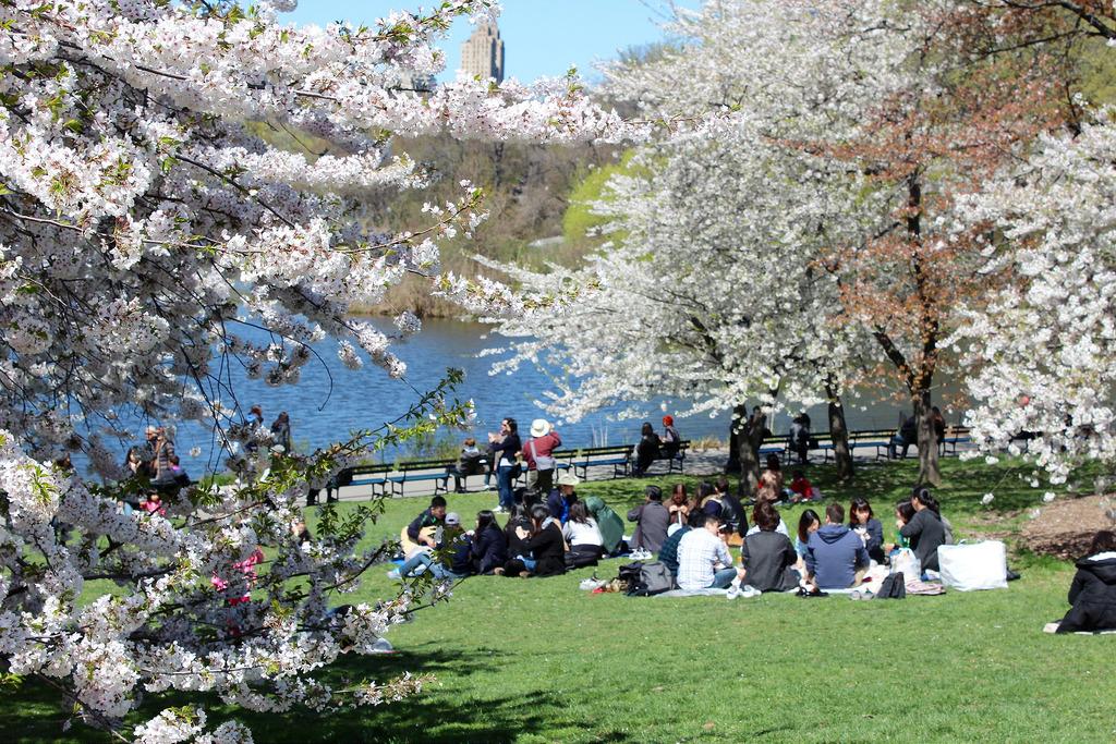 セントラルパークで桜が楽しめる定番の3スポット