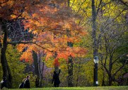ブルックリンの紅葉の名所「プロスペクトパーク」お散歩ルート
