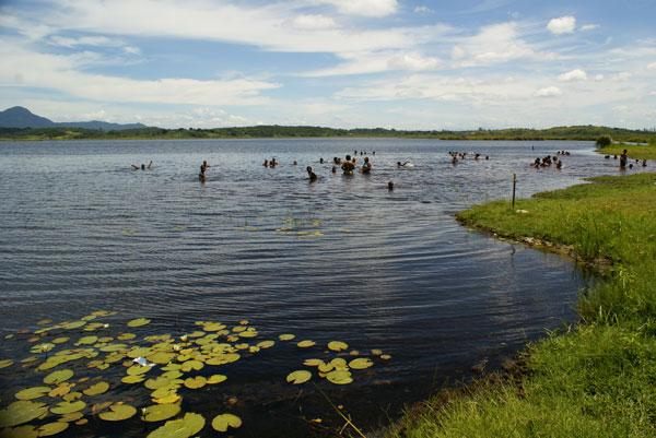 A misteriosa Lagoa de Jacarepiá, única de água doce na Região dos Lagos que já secou 2 vezes e tem areias movediças. Foto: Edimilson Soares.
