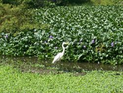 ... entre eles o saneamento da Lagoinha, em Itaúna. (foto: Rossini Maraca)