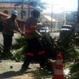 Ampla cortando árvores