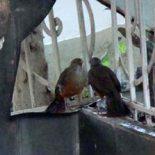 O pássaro ficou encantado com a própria imagem refletida no espelho