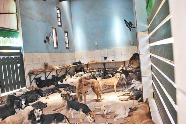 Espaço de descanso dos cães no abrigo SOSCãopanheiros, no Boqueirão (Foto: Agnelo Quintela)