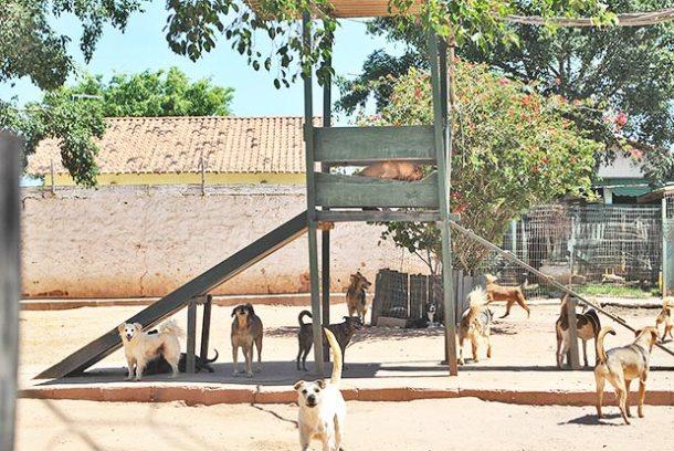 Cães que estavam abandonados nas ruas, brincam  no espaço que os acolheu no Boqueirão (Foto: Agnelo Quintela)
