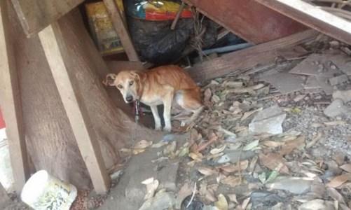 Cães abandonados precisam de ajuda
