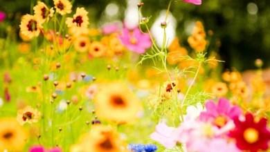 Цветница - какво означават имената