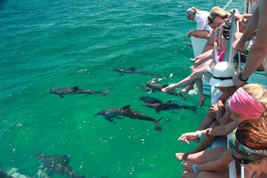 110-wildquest-dolphins