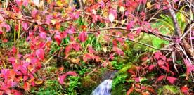Autumnal Reverie…