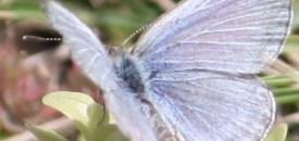 The Butterflies of Fukushima