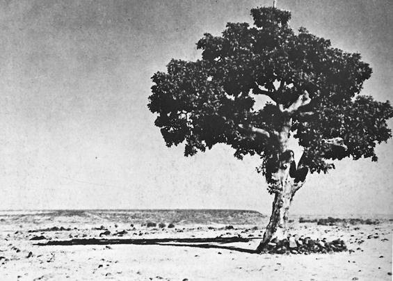 Satori tree