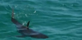 The Day A Dozen Parents and Children Killed a Shark for a Selfie