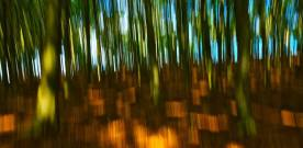 The Enchanted Forest: Blurring the Lines