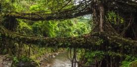 India's Amazing Living Root Bridges