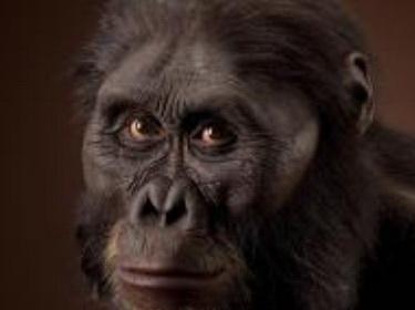 Ape Feat