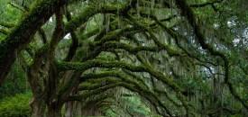 Meditation under trees