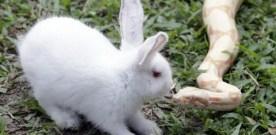 Bunny rabbit meets snake