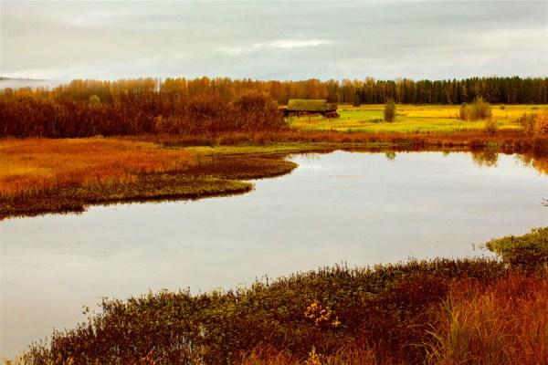 Autumn-AllanForest_07