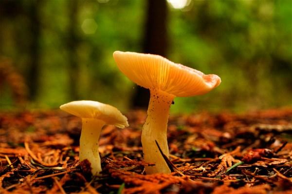 Mushrooms-AllanForest_11