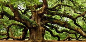 The king's carpenter asks if one of the trees wants to become a table