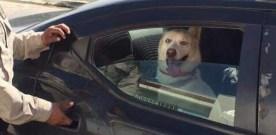 Back-seat passenger