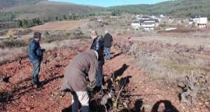 A asociación italiana ViniVeri, interesada polo viñedo valdeorrés