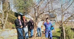A asociación O Mosteiro de Vilanova organiza un curso de poda de árbores froiteiras
