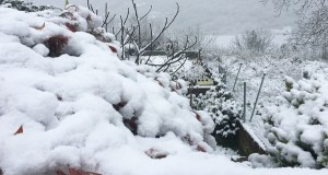 Neve de primavera en terras ourensás