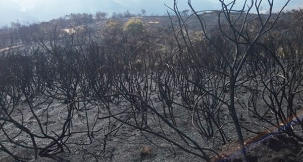 O lume de Viana, o único que permanece activo en Galicia