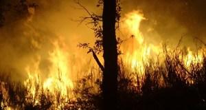 Dous incendios activos en Vilariño de Conso