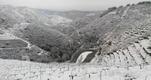 A neve cubre de branco os bancais de viñedo triveses