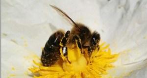 Curso intensivo de apicultura en Verín o 7 de abril