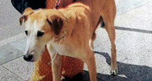 Desaparece un can no Barco de Valdeorras