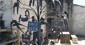 Unha peculiar árbore de aixadas, en Éntoma (O Barco de Valdeorras)