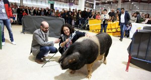 Unha criadora de Rubiá gaña o I Concurso Nacional de Manexo de Porco Celta