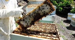 Formación para loitar contra a varroa, en Valdeorras