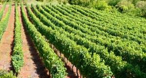 """A Asociación Galega de Viticultura alerta de """"carencias de persoal e medios"""" en diversas oficinas agrarias comarcais"""