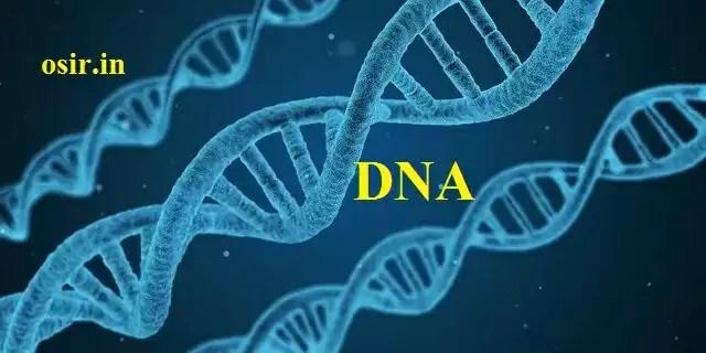 zen hormonal DNA photo
