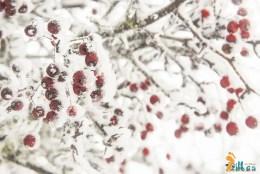 Neve na Cidade da Guarda - janeiro - 2015-42