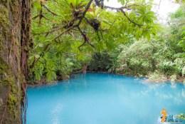 Rio Celeste, no parque nacional volcan tenorio - costa rica-7