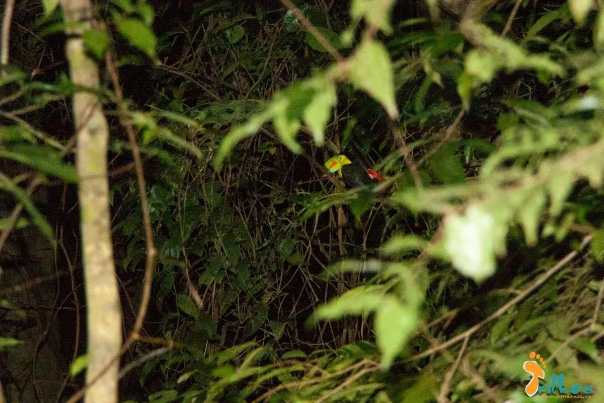 Monteverde - Costa Rica - Ponte suspensa-