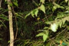 Monteverde - caminhada noturna-7