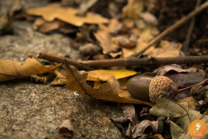 O outono que se começa a desenhar em Cevide.