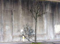 Maria Kidulis - Prison Wall Trees-2