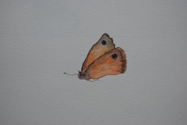 Christine Howard - Butterfly